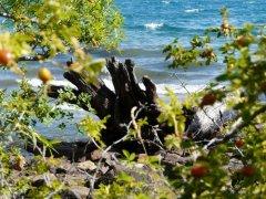Lago_Puelo_Patagonien.jpg
