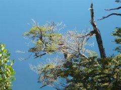 Seengebiet_Argentinien_Patagonien.jpg
